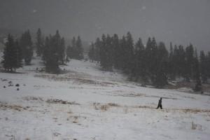 Berthoud, no snow